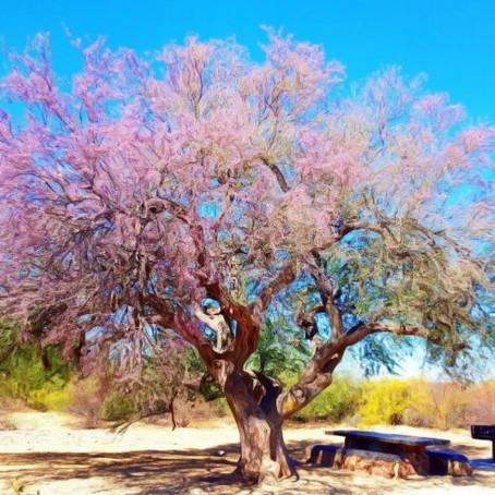 Grandmother Ironwood Tree's Sense of Humor