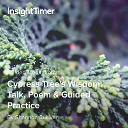 Guided Meditation with the Wisdom of Cypress Tree by Shannon Sullivan