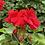 "Thumbnail: Rocky Mountain Geranium 4.5"" Pots"