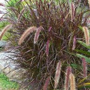 """Grass 4.5"""" Pots"""