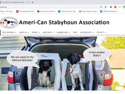 Check out the Ameri-Can Stabyhoun Association website!