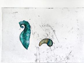 כנף- ים