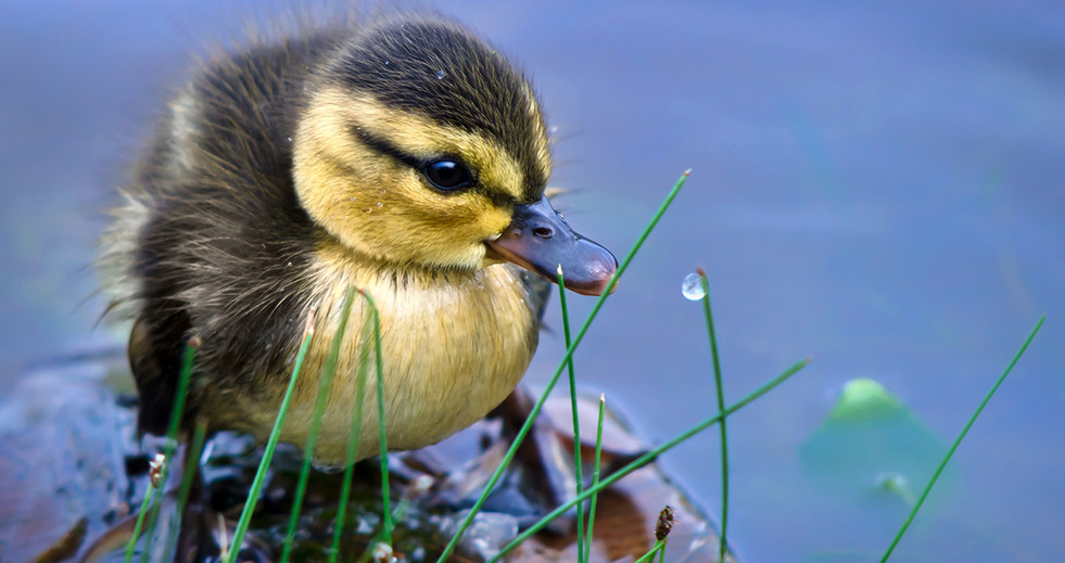 """Procter & Gamble """"Dawn Saves Wildlife"""""""