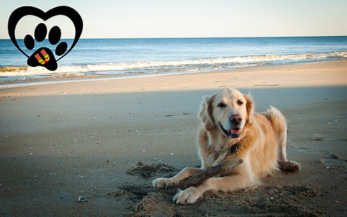Playa Tecolutla (Pet F.)
