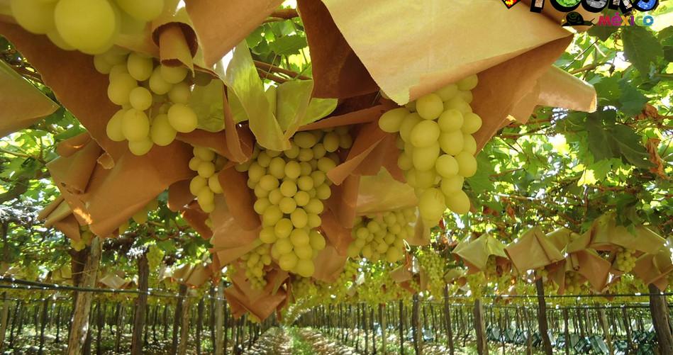 Ruta del vino y el queso 4.jpg
