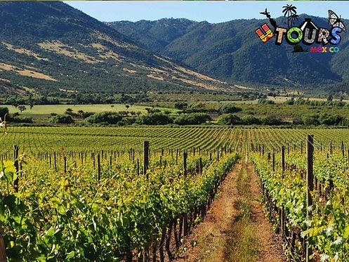 Ruta del vino + Pueblo Mágico Tequisquiapan