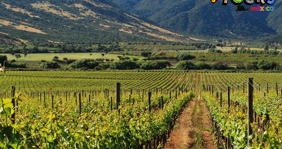 Ruta del vino y el queso 3.jpg