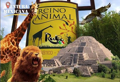 Teotihuacán + Reino animal