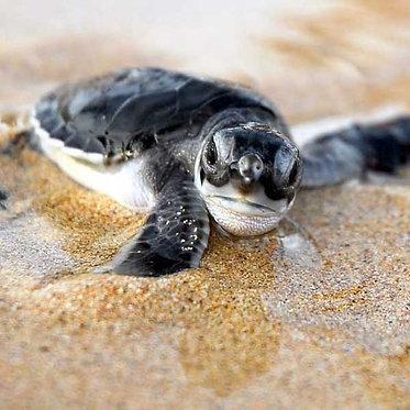 Liberación de tortugas Acapulco