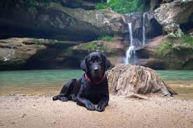 Mil cascadas pet friendly + Taxco + Platería