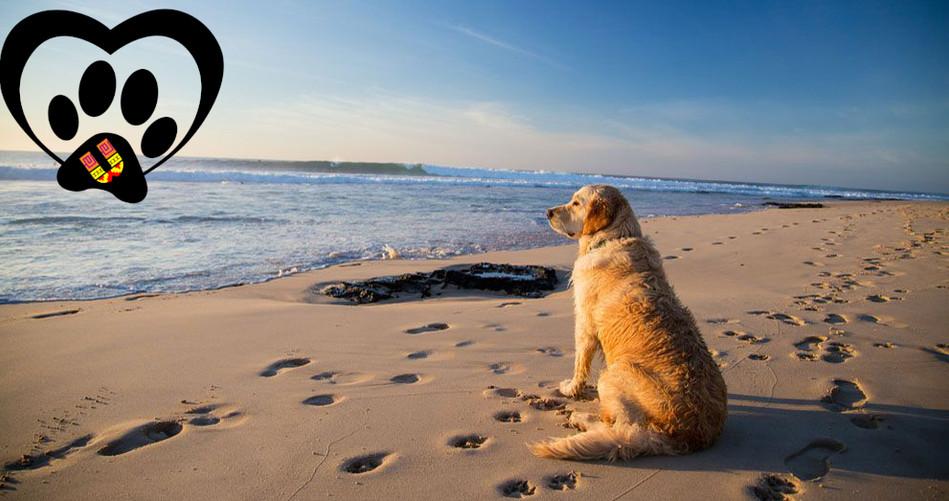 vacaciones-con-tu-perro-playa.jpg