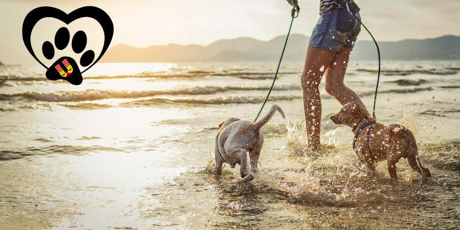 purina-brand-tips-para-ir-a-la-playa-con-perros.jpg