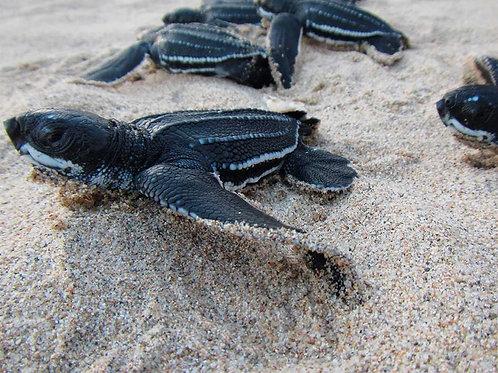 Liberación de tortugas Tecolutla