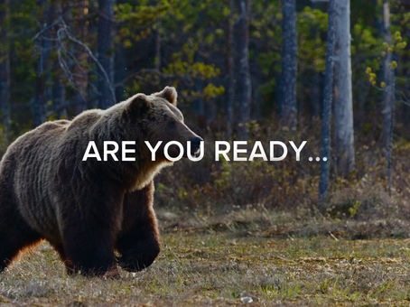 WATCH IT NOW | New @ WOLF + BEAR