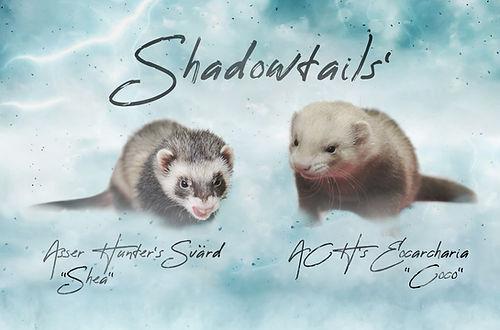 shadowtails_01122018_final.jpg