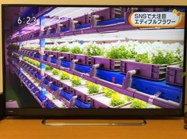 awakosai_edibleflower_NHK_2.jpg