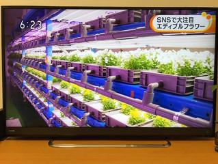 とく6徳島にて放映!