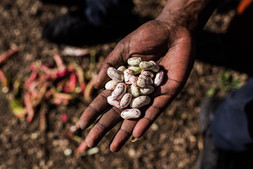 hand seeds.jpg