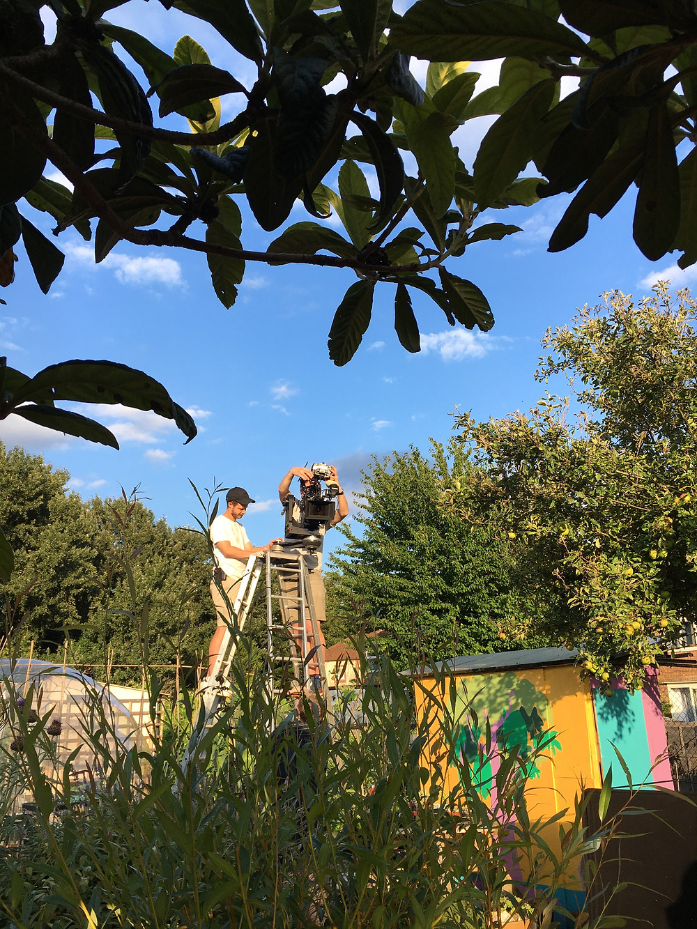 Two camera men stand either side at the top of a ladder, adjusting a film camera ready for filming. The dark leaves of the loquat in the foreground provide a dramatic contrast against the bright blue sky and lush green vegetation.