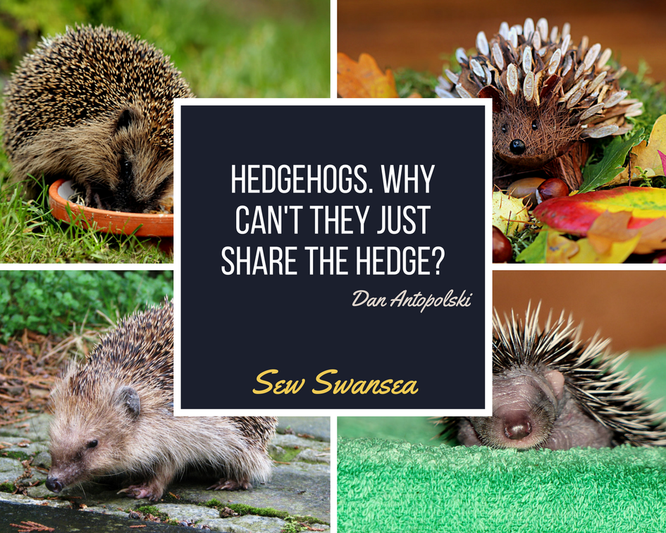 e95a524e2 Hedgehogs. Why can't they just share the hedge? | Sewing and crochet  workshops in the heart of Swansea