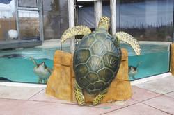 Living Coast Turtles