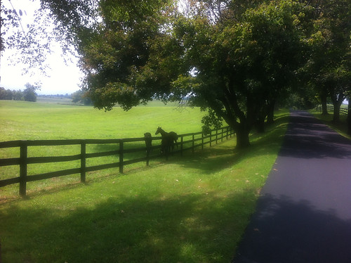 Lazy T Lane - Home of Mahdi Omar's Thoroughbreds