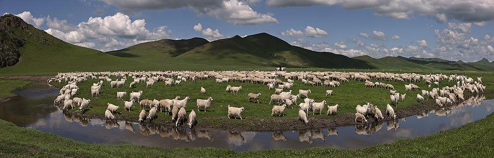 草原羊群横拍调过色缩小版2.jpg