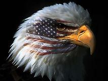 SDAEagleheadflag.jpg