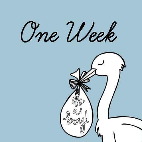 One-Week Stork Visit Rental