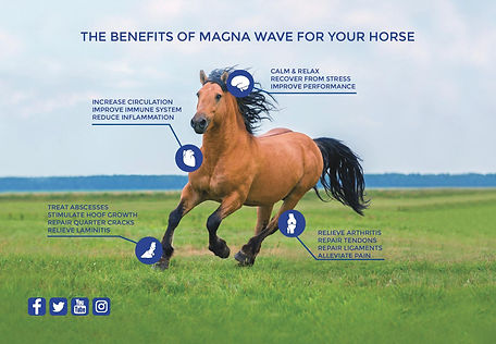 magna-wave-Equine-PostCard-Folder-FOR-PR