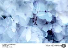 irinas_FlourushDream-01.jpg