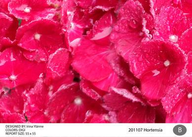 irina 201107 hortensia-01.jpg
