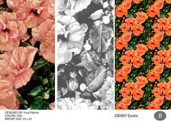 irina exotic 200907-01-02.jpg