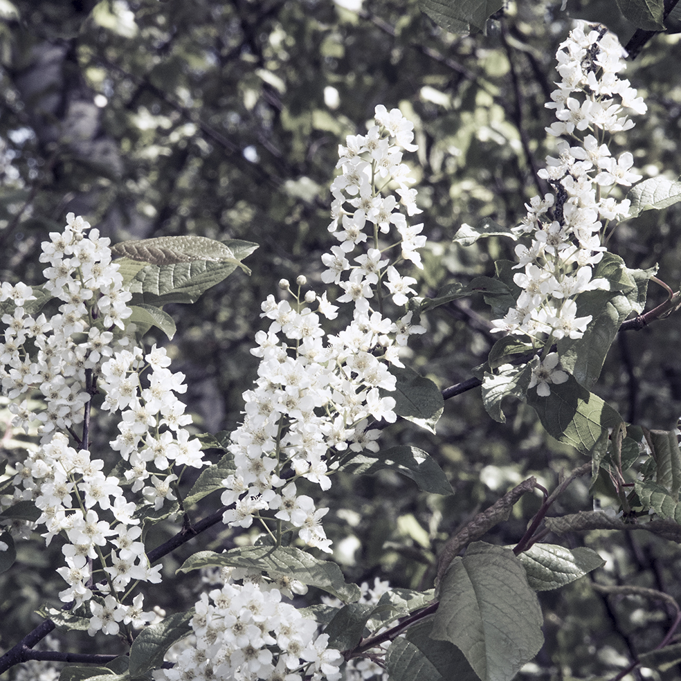 160308 Kukkiva puu, 64 x 64, col2