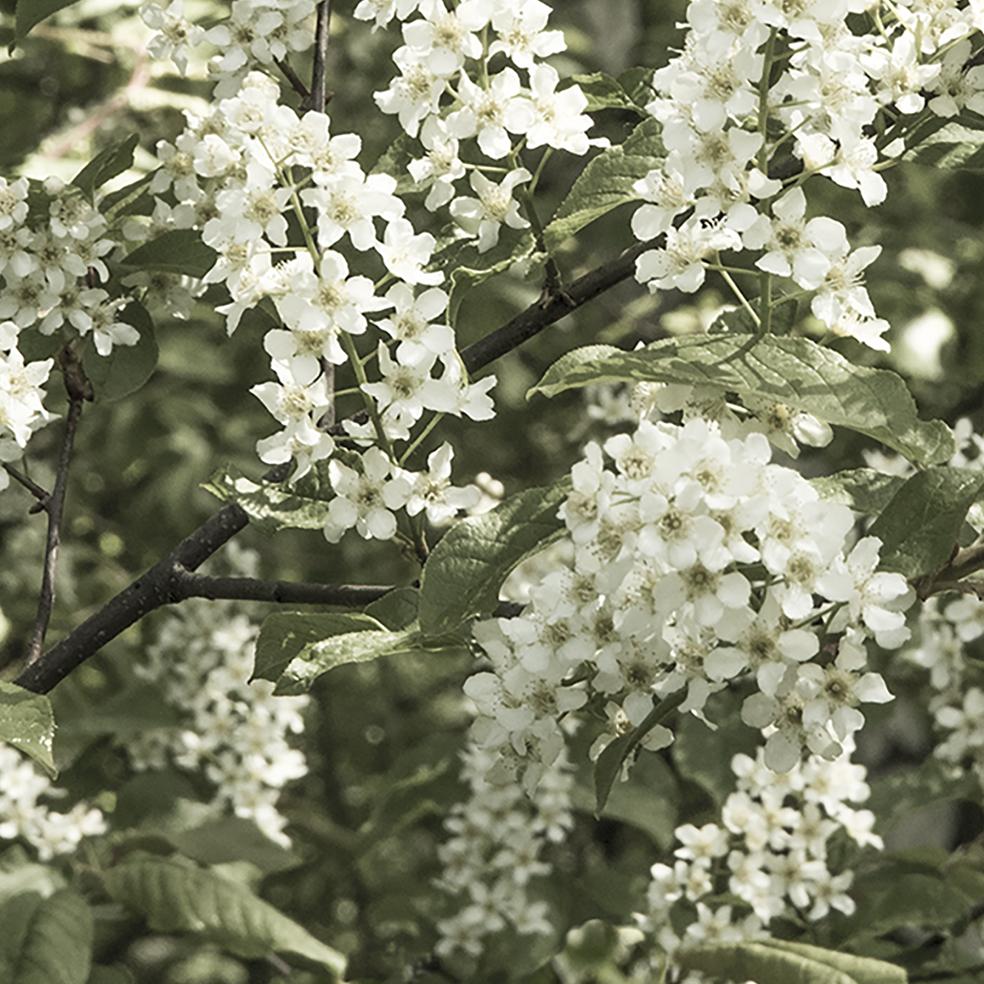 160308 Kukkiva puu, 64 x 64, col3