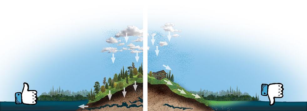 LandDisturbanceGraphic.jpg