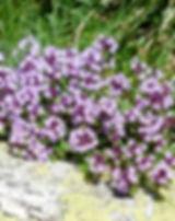 thymus-177261_640.jpg