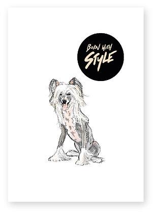 STYLISH DOG,  DOG, LONG HAIRED DOG, FUNNY CARD, HOW FUNNY