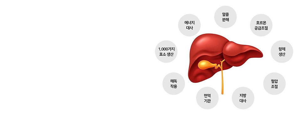 liver-main2.jpg
