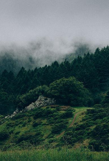 Scottish hill scene