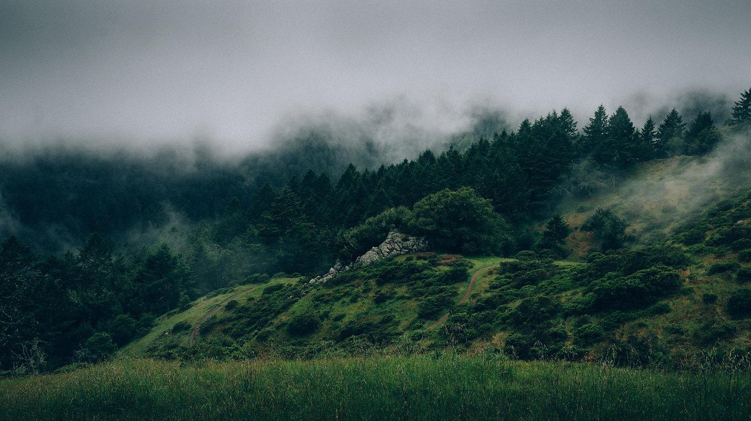 Mlha a příroda