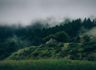 Skogsdrift