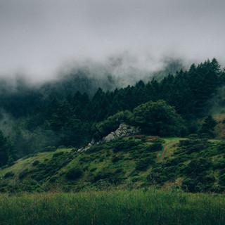 Nebel und Natur