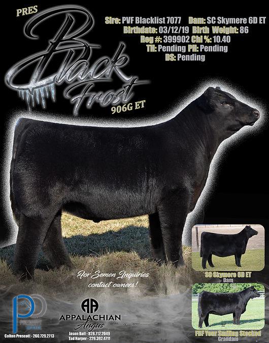 Black Frost Bull v4.jpg