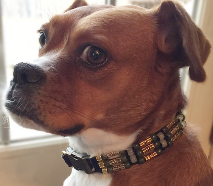 This Puppy is always ready for her close up. Wearing a Beautiful Love Dog Collar.