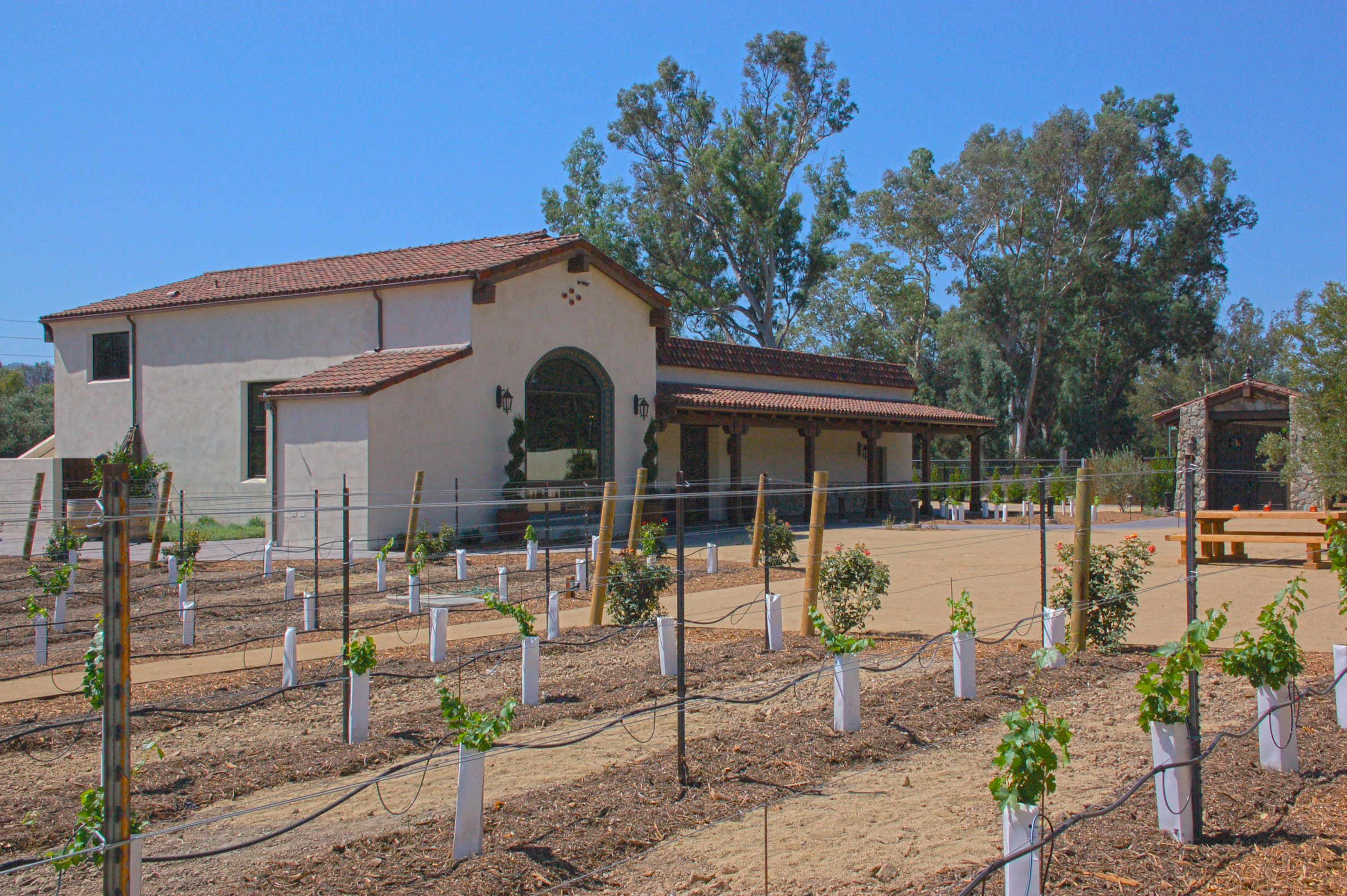 Winery Grapevines