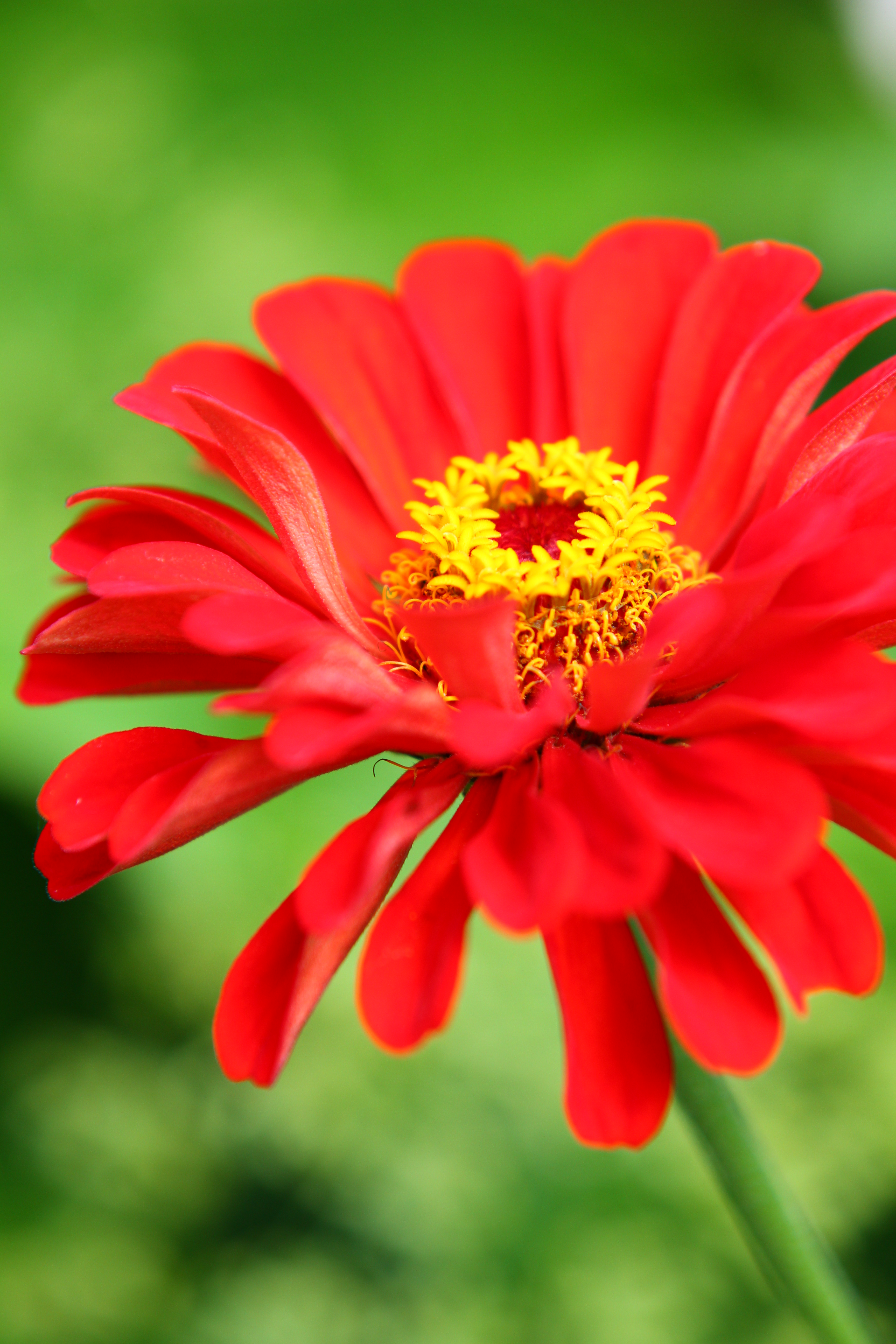 Fleur orange