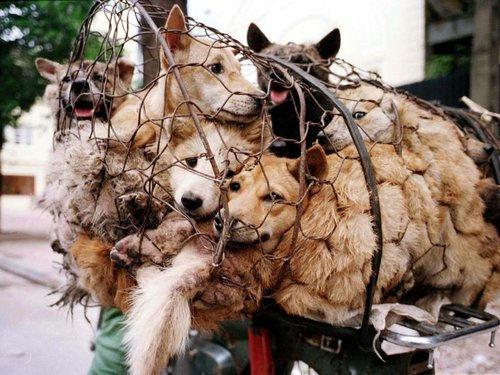 yulin-dog-meat-festival.jpg