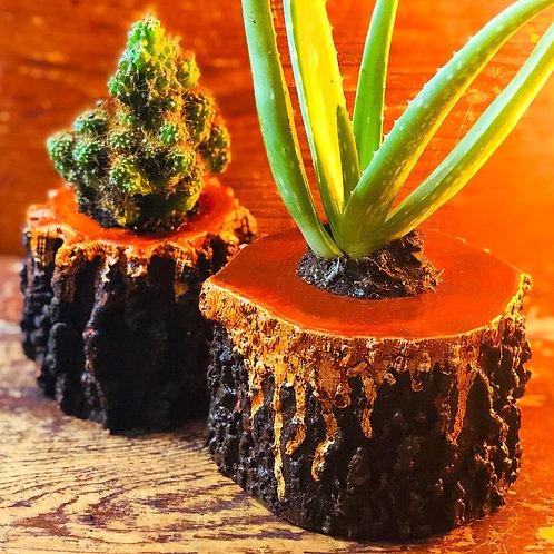 Lava Wood Planter Set With Live Plants