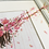 Thumbnail: La Vie En Rose-Full Bloom Edition